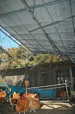 鶏舎の屋根