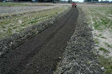 育苗も無農薬の田んぼの土で