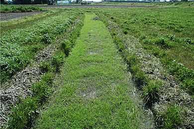 育苗用土の採取跡